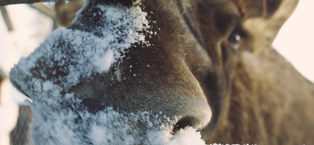 Św. Mikołaj i sauna, czyli po co jechać do Laponii
