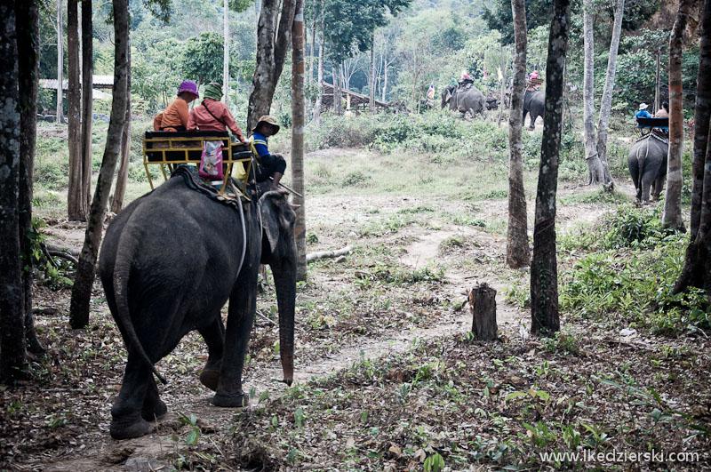 slonie-w-tajlandii